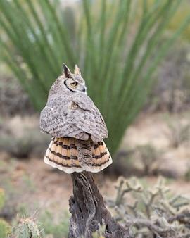 Большая рогатая сова, сидящая спиной