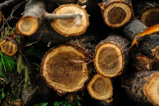 天然木の幹のカットの平面図のクローズアップ
