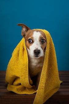 タオルでシャワーを浴びた後の犬