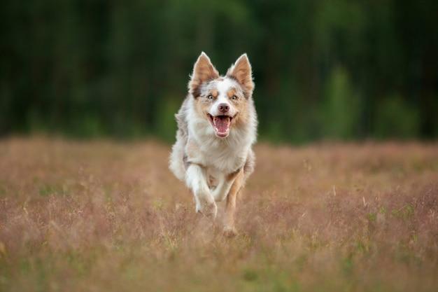Собака бежит по траве