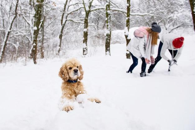 Кокер спаниель делает снеговика