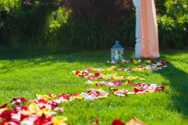 Разноцветные лепестки роз на траве