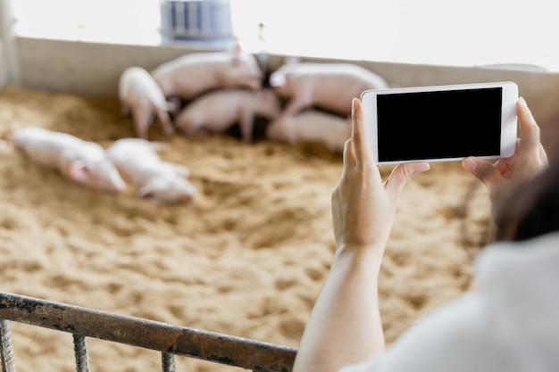 有機農村ファーム農業でモバイルスマートフォンで写真を撮る農家の手。