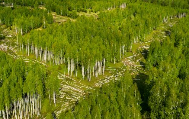ドローンで上から新しい道路の新しい緑の森を切り取る