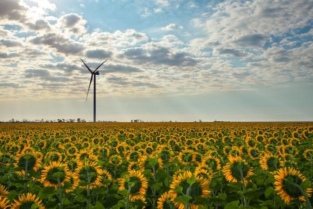 Поле подсолнухов и работы ветряных турбин, экологическая энергетика ветряной мельницы днем