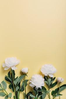 黄色の壁に白のエレガントな牡丹