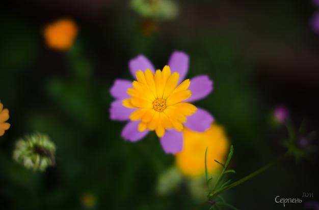 自然の背景にソフトフォーカスの花