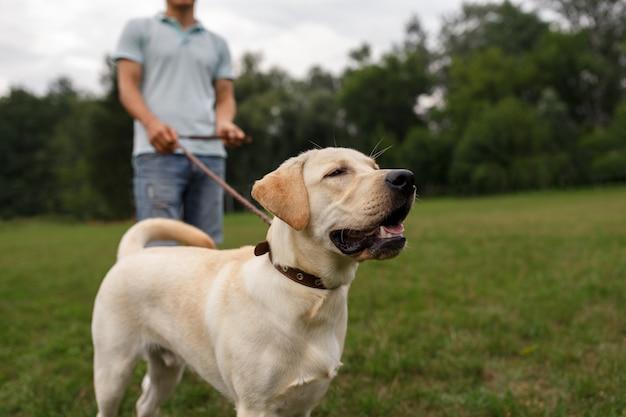 Счастливый молодой человек гуляет с собакой лабрадор на открытом воздухе