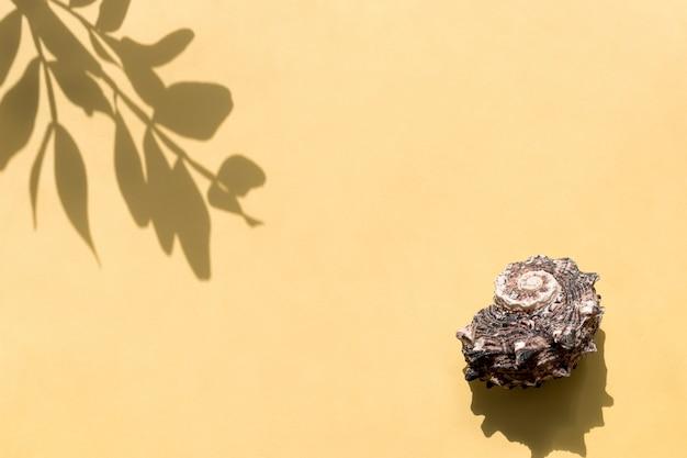 Вид сверху листьев тени и раковины. минимальная летняя концепция.