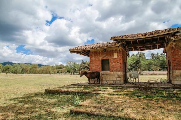 Маленькие сардинские лошади укрываются от солнца под старой структурой в средиземноморском сельском пейзаже