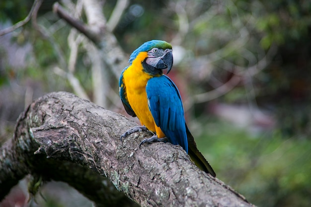 Красочный попугай на дереве в юнгасе