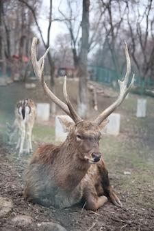 動物園での自然写真の鹿