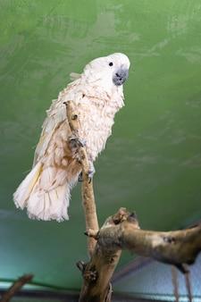 Попугай сидит на ветке на зеленом