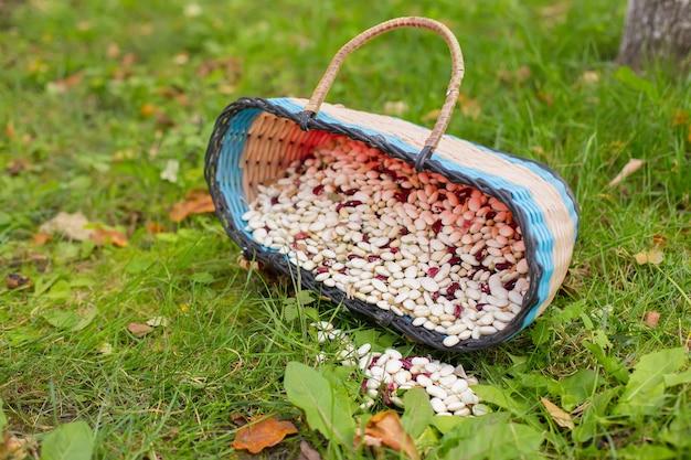 緑の芝生の上のバスケットのインゲン豆
