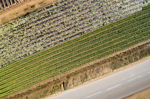 作物のいくつかの分野の空撮