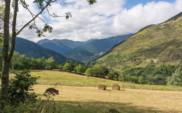 草作物の山の風景