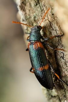 Зеленый и оранжевый жук на ветке дерева.
