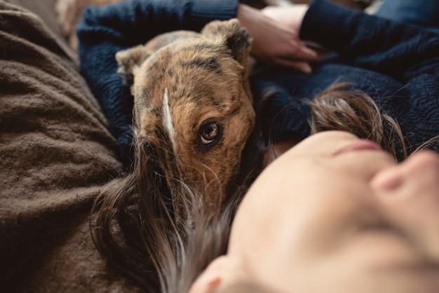 グレイハウンドが休憩して飼い主を抱き締める