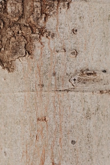 Крупный план ствола дерева