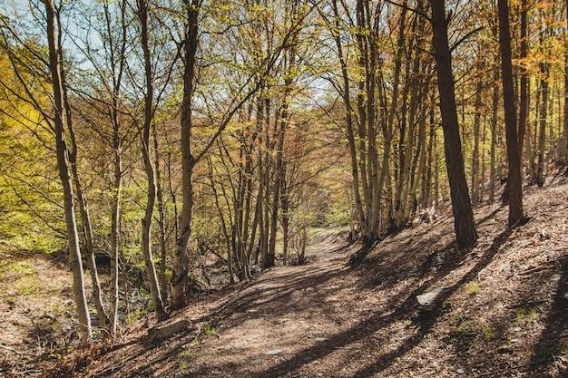 Холмистый путь в лесу
