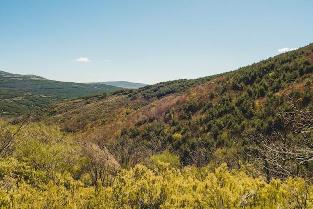 Растительность в холмистой среде