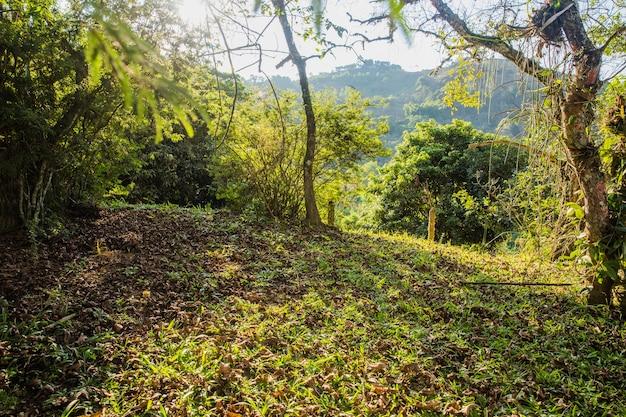 Холмистый зеленый пейзаж
