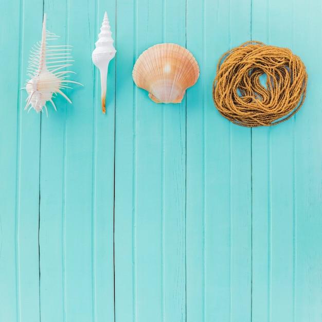 Веревка и различные морские ракушки