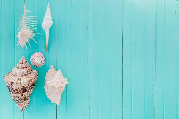 Разнообразные морские ракушки на окрашенной древесине