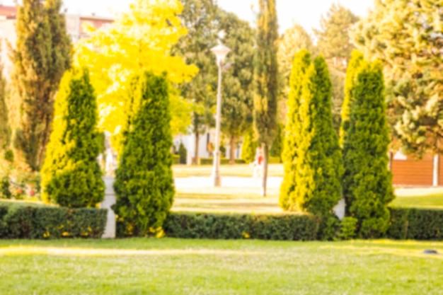 公園の緑の木の眺め
