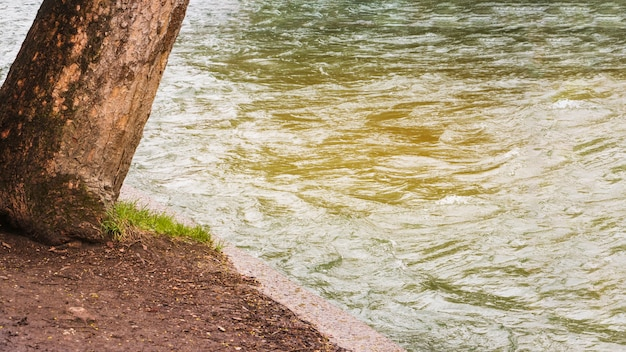 Дерево, растущее водой