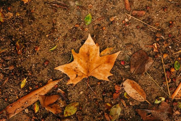 シング秋の葉