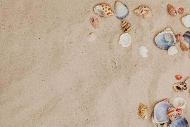 貝殻と空白のある砂地