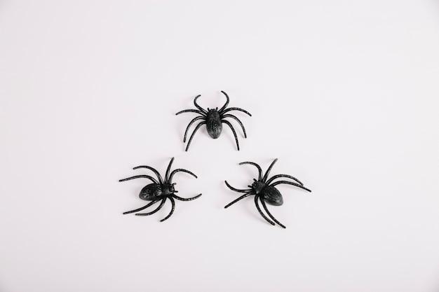 白い背景に横たわるクモ