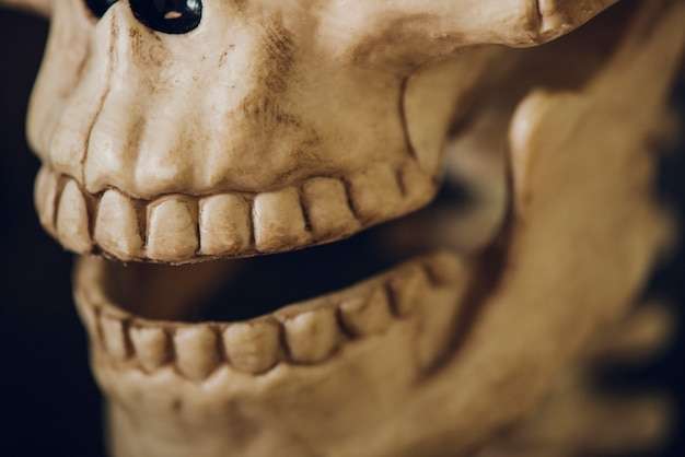 Крупный план черепа