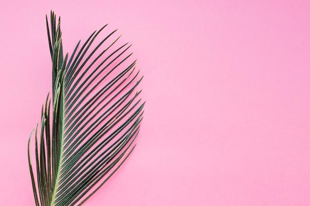 ピンクの質感のある葉
