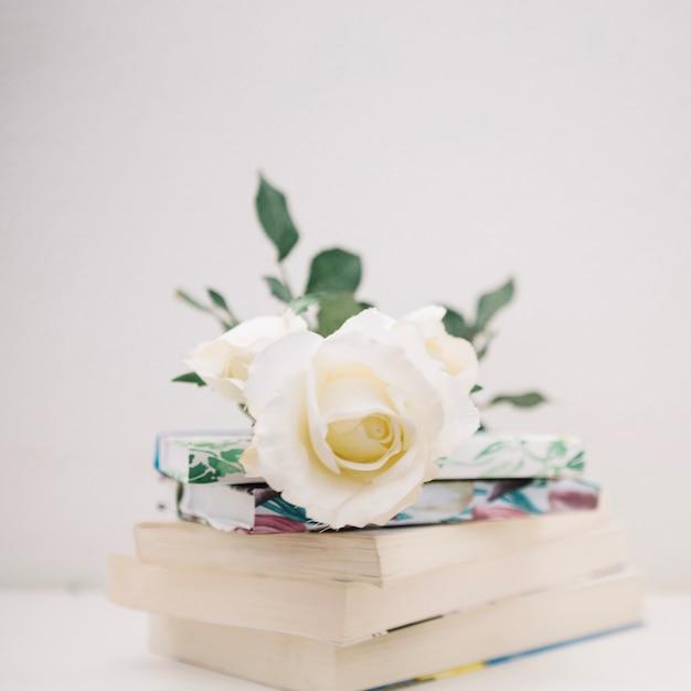 Осе на кучу книг