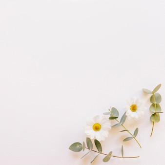 装飾的な花の背景
