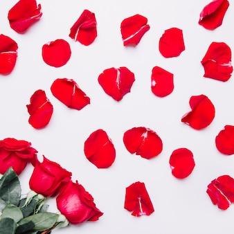 Фон с лепестками роз
