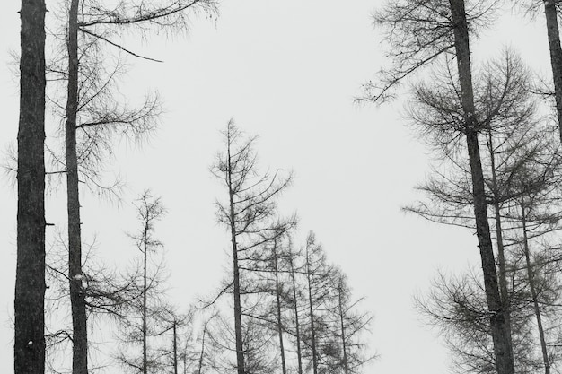 森林の葉なしの木々