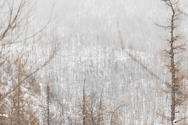 冬の美しい森