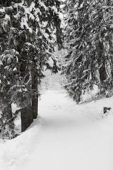 冬の森の中の道