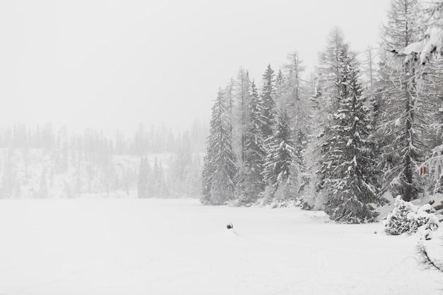 冬の森と畑