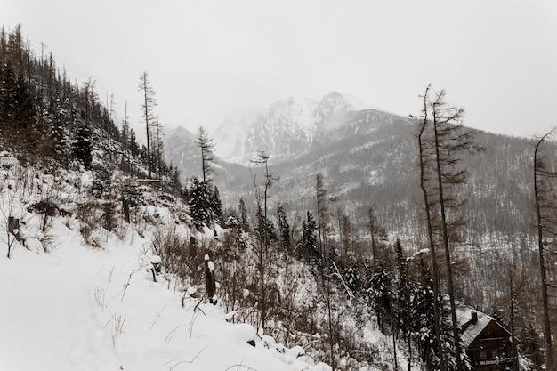 雪の多い丘と森