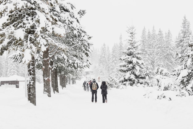 雪の多い森を歩いている人々