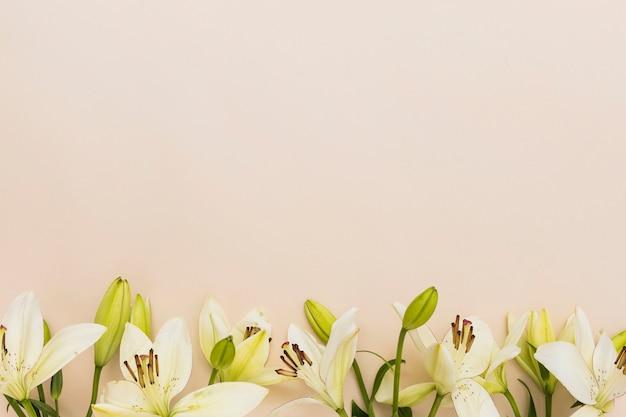 Желтые лилии на бежевом фоне