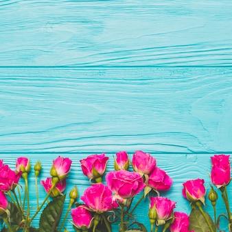 ターコイズブルーの背景にフクシアのバラ