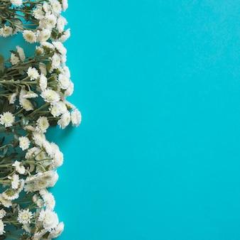 Полевые цветы выстроились слева на весну