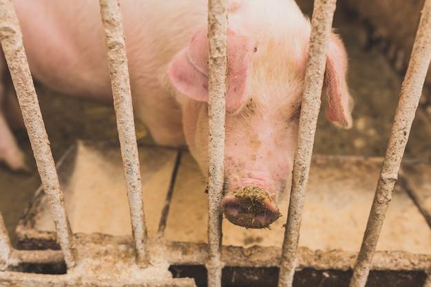 Розовая свинья в клетке