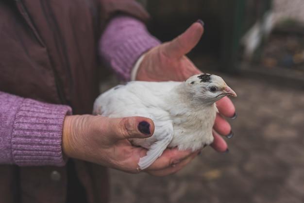 Рука с белым птенцом