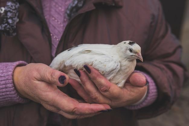 Фермер с белым птенцом